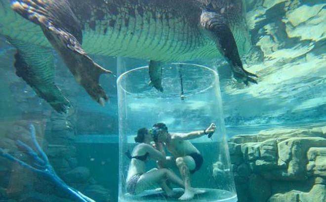 Cầu hôn bạn gái trong Lồng tử thần giữa hai con cá sấu khổng lồ