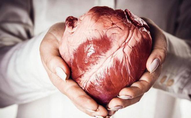 """Tại sao có bao nhiêu loại ung thư, chẳng bao giờ chúng ta nghe thấy """"ung thư tim""""?"""