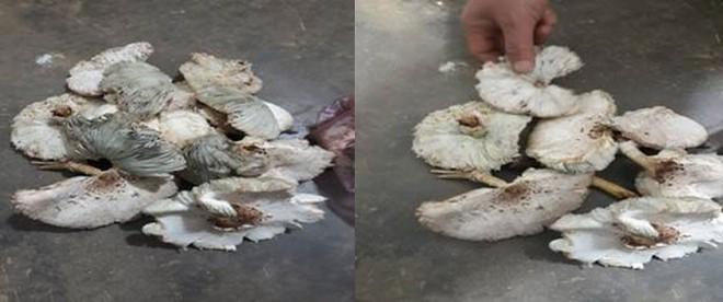 9 người ngộ độc do ăn nấm mọc sau nhà: Bộ Y tế cảnh báo loạt nguy cơ của nấm lạ, nấm hoang dại - Ảnh 2.