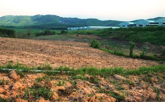 Vì sao dự án nuôi bò Bình Hà gần 5.000 tỷ đang chết lâm sàng? - Ảnh 3.