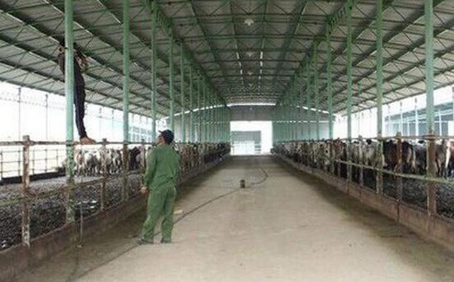 Bắt nguyên Tổng giám đốc Công ty chăn nuôi Bình Hà