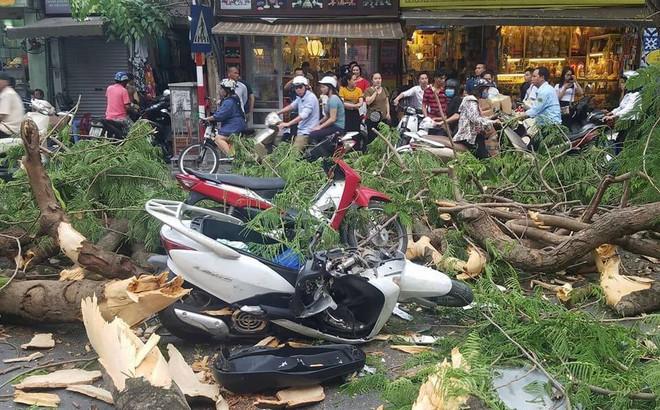 Cây cổ thụ bật gốc đè xe máy trên phố Hà Nội, 5 người bị thương