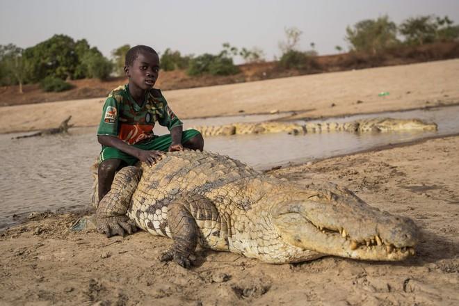 7 ngày qua ảnh: Cậu bé cưỡi trên lưng cá sấu khổng lồ - Ảnh 2.