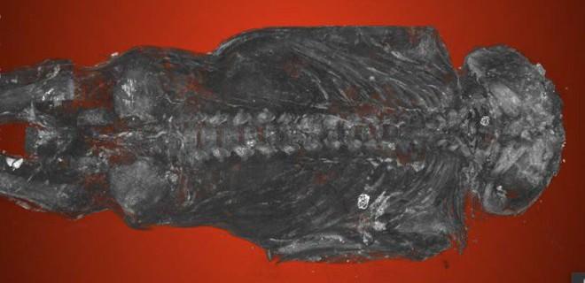Chụp cắt lớp xác ướp chim ưng Ai Cập bỗng nhiên phát hiện bất ngờ lớn - Ảnh 1.