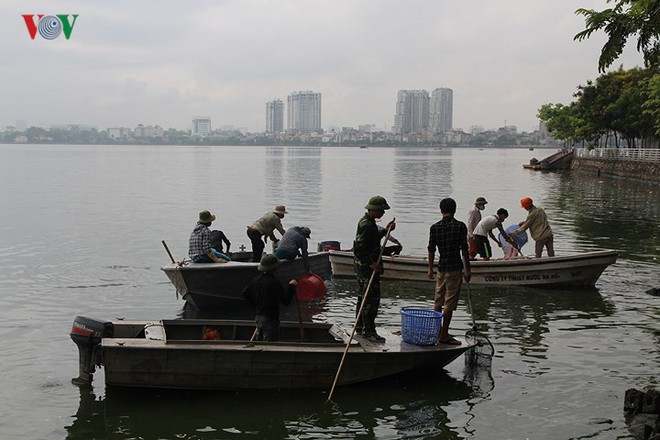 10 tấn cá chết, mùi hôi thối bủa vây người dân Hồ Tây - Ảnh 2.