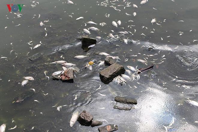 10 tấn cá chết, mùi hôi thối bủa vây người dân Hồ Tây - Ảnh 4.
