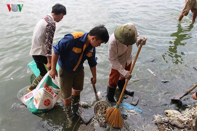10 tấn cá chết, mùi hôi thối bủa vây người dân Hồ Tây - Ảnh 7.
