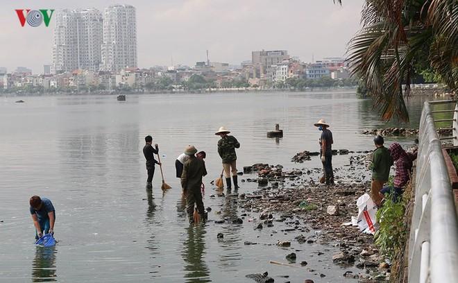 10 tấn cá chết, mùi hôi thối bủa vây người dân Hồ Tây - Ảnh 10.