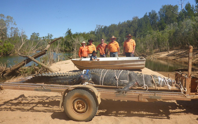 24h qua ảnh: Bắt sống cá sấu quái vật nặng 600kg sau 8 năm săn tìm - Ảnh 2.