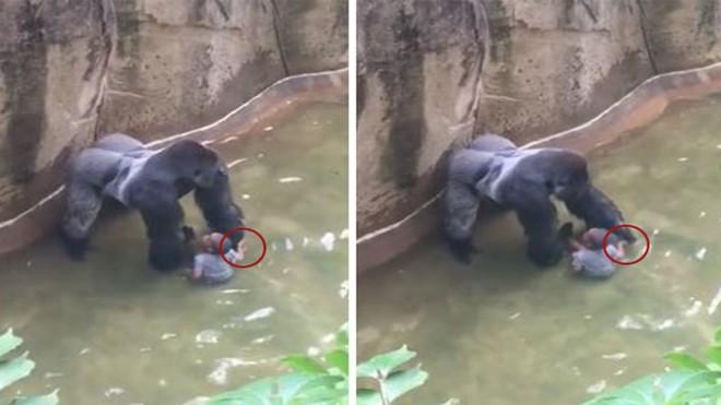 Trung Quốc: Cùng mẹ cho khỉ ăn ở vườn thú, bé gái bất ngờ bị con vật đấm vào mặt - Ảnh 3.