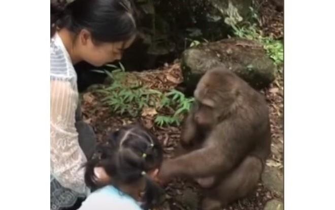 Trung Quốc: Cùng mẹ cho khỉ ăn ở vườn thú, bé gái bất ngờ bị con vật đấm vào mặt - Ảnh 1.