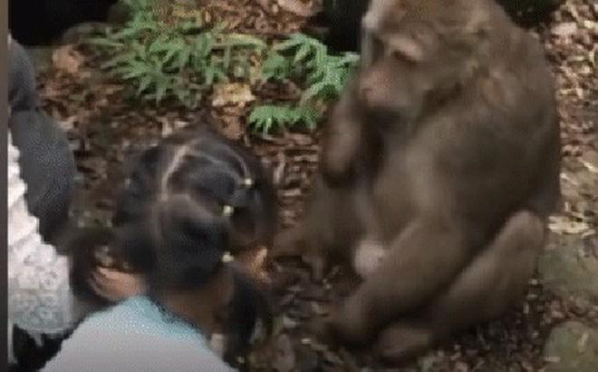 Trung Quốc: Cùng mẹ cho khỉ ăn ở vườn thú, bé gái bất ngờ bị con vật đấm vào mặt