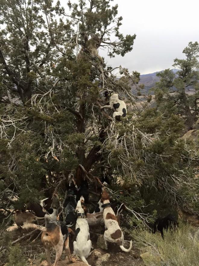 Leo lên cây cao truy sát báo sư tử, chó săn dính đòn đau nhớ đời - Ảnh 2.