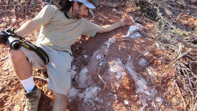 Phát hiện hóa thạch khổng lồ mới: Khủng long còn lớn hơn tưởng tượng - Ảnh 4.