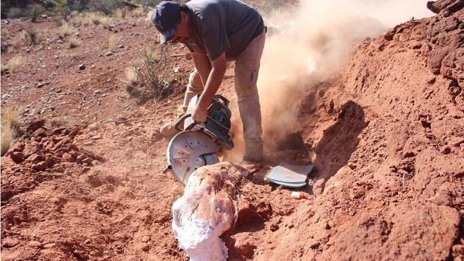 Phát hiện hóa thạch khổng lồ mới: Khủng long còn lớn hơn tưởng tượng - Ảnh 2.