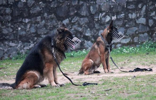 Chuyên gia huấn luyện bật mí bí mật không ngờ tại sao chó cắn chủ - Ảnh 1.