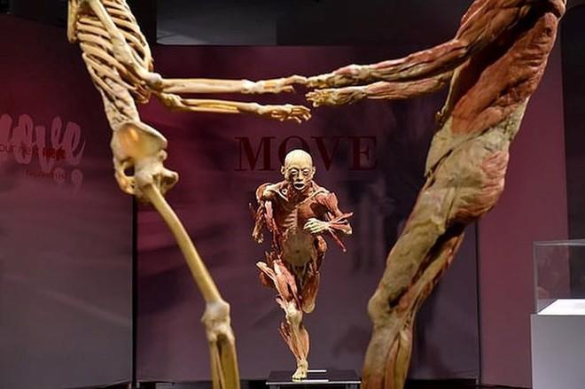 [ẢNH] Cận cảnh triển lãm xác người đầy ám ảnh được tổ chức ở TP.HCM sau khi Hà Nội không cấp phép - Ảnh 1.