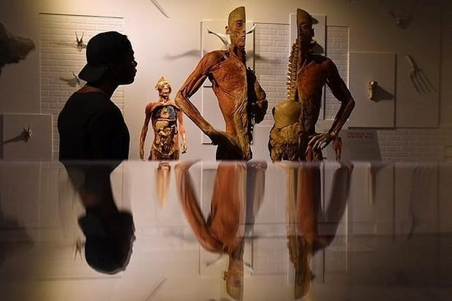 [ẢNH] Cận cảnh triển lãm xác người đầy ám ảnh được tổ chức ở TP.HCM sau khi Hà Nội không cấp phép - Ảnh 2.