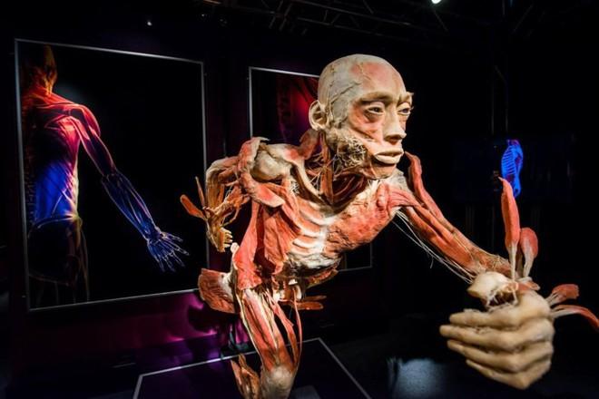 [ẢNH] Cận cảnh triển lãm xác người đầy ám ảnh được tổ chức ở TP.HCM sau khi Hà Nội không cấp phép - Ảnh 17.