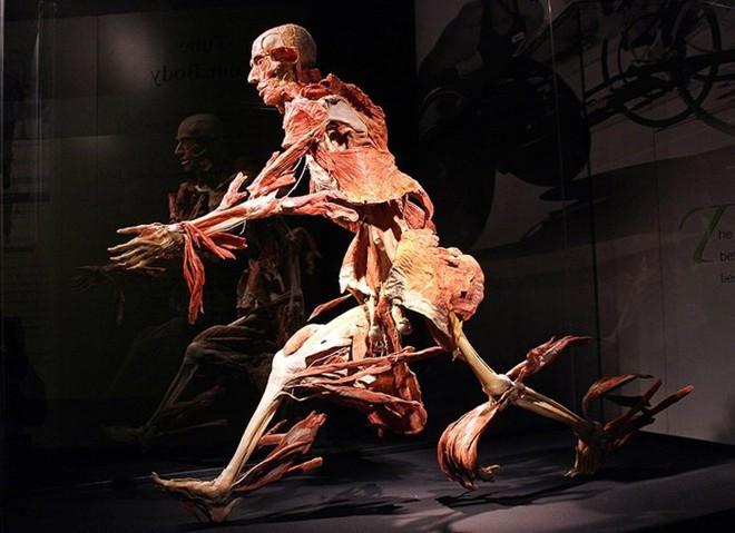 [ẢNH] Cận cảnh triển lãm xác người đầy ám ảnh được tổ chức ở TP.HCM sau khi Hà Nội không cấp phép - Ảnh 19.