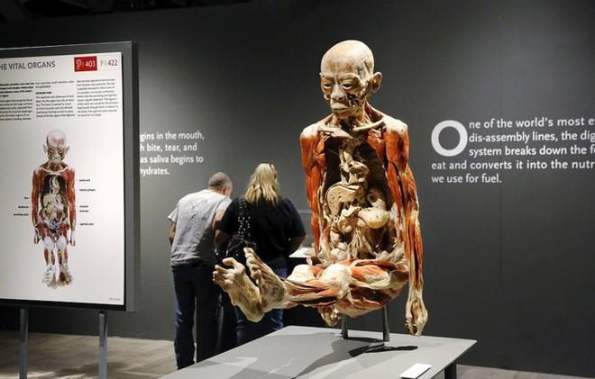 [ẢNH] Cận cảnh triển lãm xác người đầy ám ảnh được tổ chức ở TP.HCM sau khi Hà Nội không cấp phép - Ảnh 20.