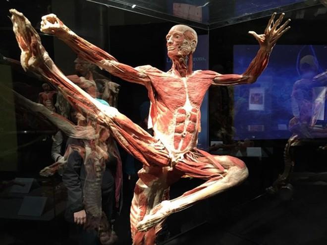 [ẢNH] Cận cảnh triển lãm xác người đầy ám ảnh được tổ chức ở TP.HCM sau khi Hà Nội không cấp phép - Ảnh 3.