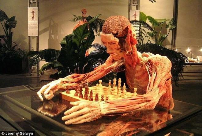 [ẢNH] Cận cảnh triển lãm xác người đầy ám ảnh được tổ chức ở TP.HCM sau khi Hà Nội không cấp phép - Ảnh 21.