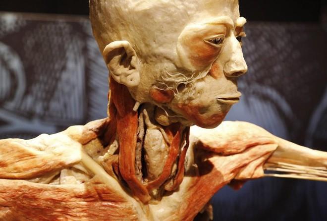 [ẢNH] Cận cảnh triển lãm xác người đầy ám ảnh được tổ chức ở TP.HCM sau khi Hà Nội không cấp phép - Ảnh 22.