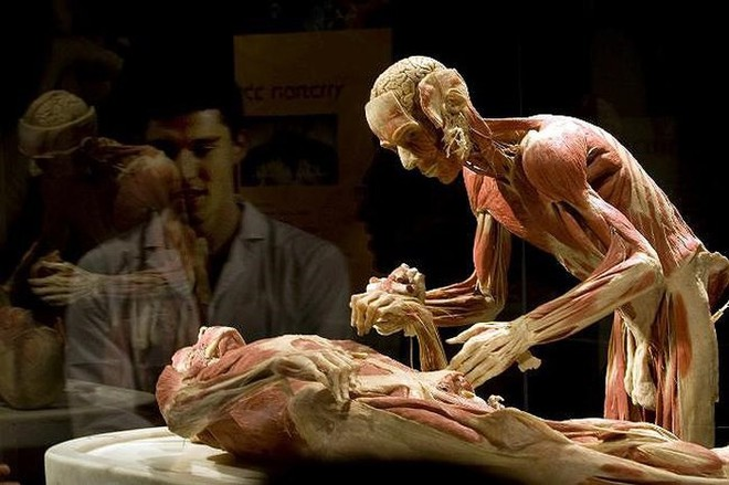 [ẢNH] Cận cảnh triển lãm xác người đầy ám ảnh được tổ chức ở TP.HCM sau khi Hà Nội không cấp phép - Ảnh 23.