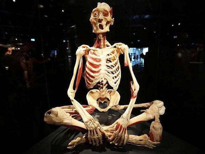 [ẢNH] Cận cảnh triển lãm xác người đầy ám ảnh được tổ chức ở TP.HCM sau khi Hà Nội không cấp phép - Ảnh 9.