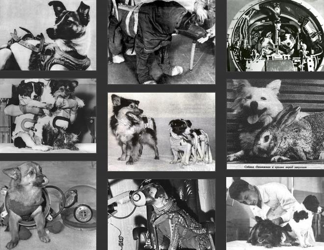 Sứ mệnh có 1-0-2 của 3 chú chó phi hành gia Liên Xô: Laika chết khi tròn 3 tuổi - Ảnh 1.