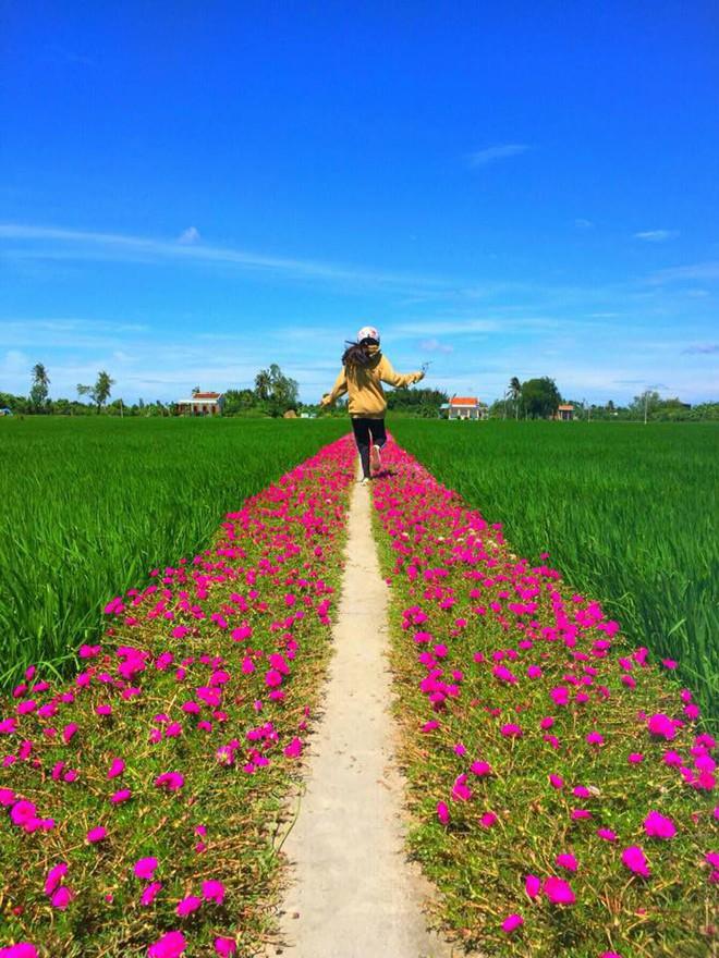 Con đường hoa mười giờ giữa 2 thửa ruộng đẹp như tranh khiến dân mạng ở Tiền Giang muốn đến check-in bằng được - Ảnh 2.