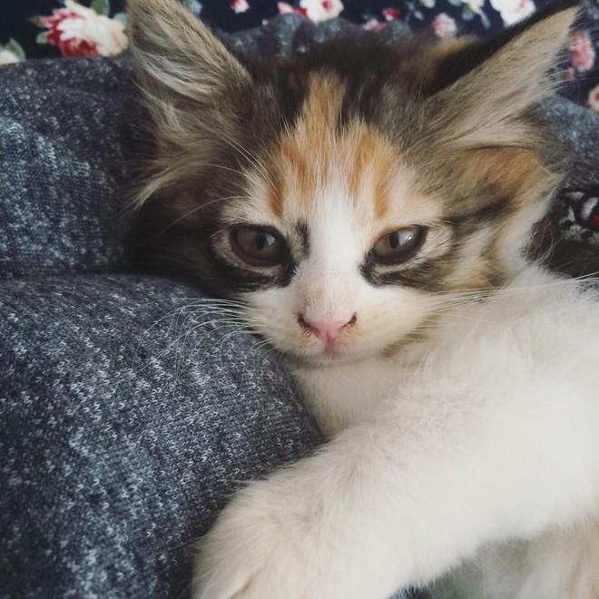 Vì một chú mèo, con gái thắc mắc rốt cuộc mình là con đẻ hay con nuôi của mẹ - ảnh 3
