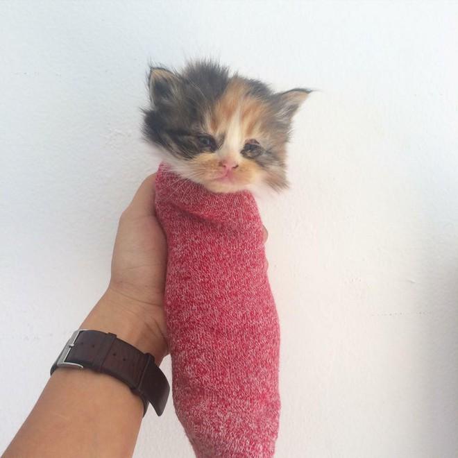 Vì một chú mèo, con gái thắc mắc rốt cuộc mình là con đẻ hay con nuôi của mẹ - ảnh 7
