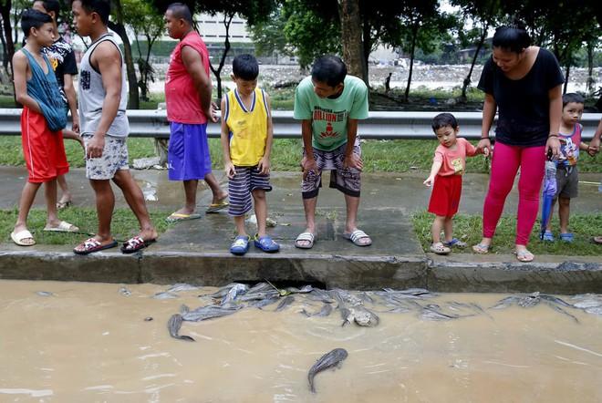 24h qua ảnh: Cá bị nước cuốn lên đường phố sau bão lớn ở Philippines - ảnh 3