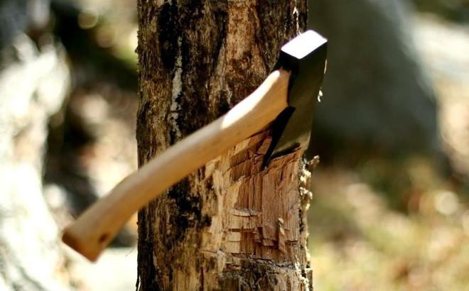 Ân tình của cái cây: Câu chuyện cảm động khiến người người phải suy ngẫm!