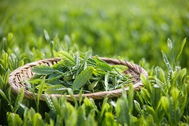 Thời điểm nào tốt nhất để uống trà xanh? - Ảnh 2.
