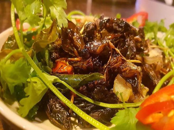 Ăn côn trùng lại rất tốt cho đường ruột? - Ảnh 1.