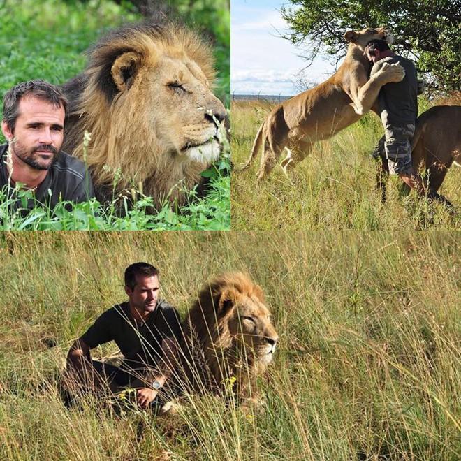 Kevin được bầy sư tử xem như thành viên trong bầy. Ảnh: Intagram
