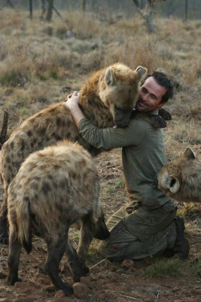 Ngoài sư tử, Kevin còn xây dựng mối quan hệ thân thiết với linh cẩu hay báo. Ảnh: Taringa!