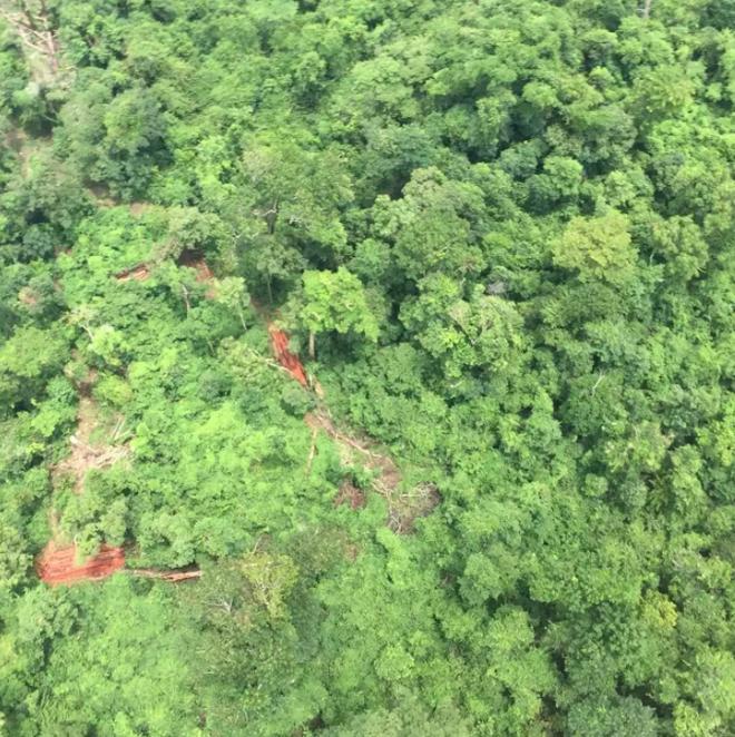 Bí ẩn máy bay gãy đuôi nghi MH370 trong rừng rậm Campuchia được giải mã - Ảnh 3.