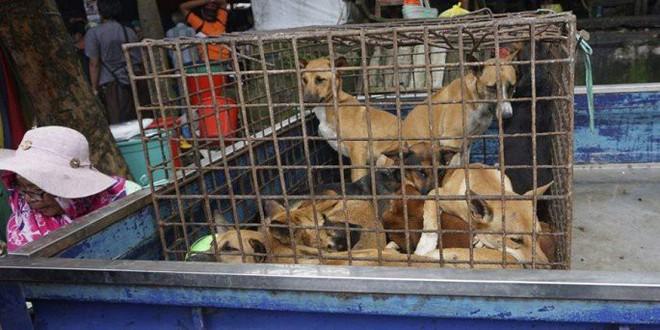 Các hành vi buôn bán, vận chuyển, tiêu thụ thịt chó mèo ở Mỹ sẽ bị phạt 5.000 USD. (Ảnh: AP)