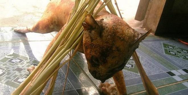 Đừng nghĩ bị chó cắn mới mắc bệnh dại, ăn thịt mèo không đúng cũng nhiễm dại như thường - Ảnh 3.