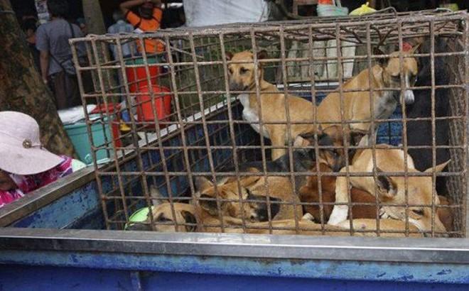 Mỹ ra nghị quyết kêu gọi các nước châu Á ngừng ăn thịt chó, mèo