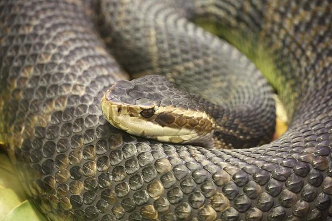 Mỹ: Siêu bão Florence có thể khiến rắn từ đầm lầy văng tới các con phố - Ảnh 1.