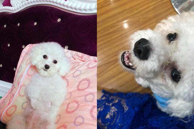 Bí mật gây cười đằng sau chú chó luôn ngậm miệng khi chụp ảnh và chiếc bồn cầu 'hụt chân' - ảnh 1