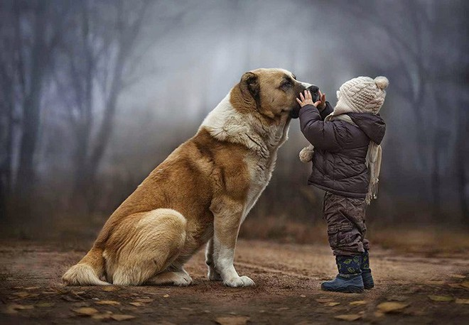 Sống cạnh con người khiến loài chó chịu khổ rất giỏi, và chúng biết 'ghen tuông'! - ảnh 5
