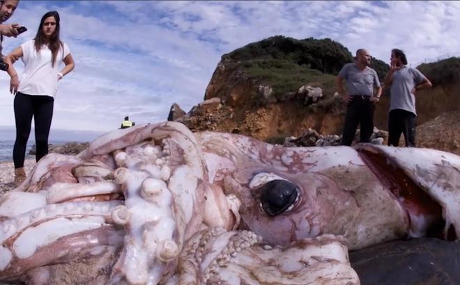10 sinh vật khổng lồ bị con người phát hiện trên bờ biển