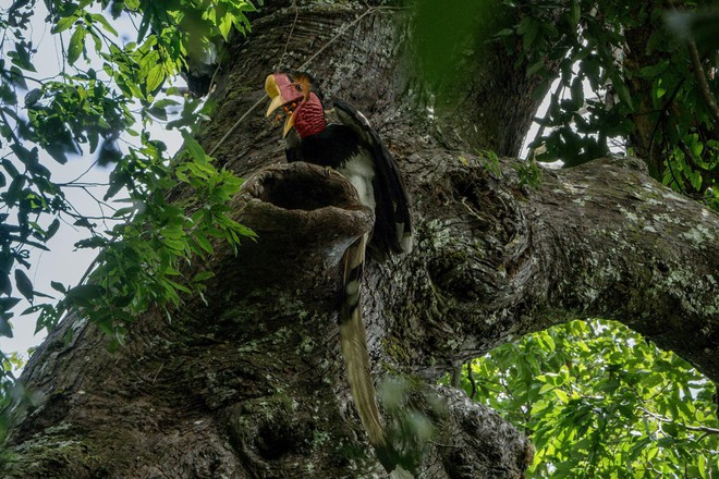 """Nước mắt chim Tê Điểu: """"Báu vật sống"""" bị săn lùng vì có chiếc mỏ đắt gấp 3 lần ngà voi - ảnh 6"""