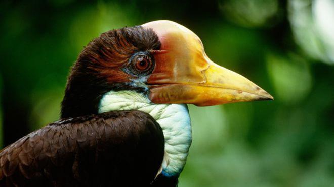 """Nước mắt chim Tê Điểu: """"Báu vật sống"""" bị săn lùng vì có chiếc mỏ đắt gấp 3 lần ngà voi - ảnh 9"""